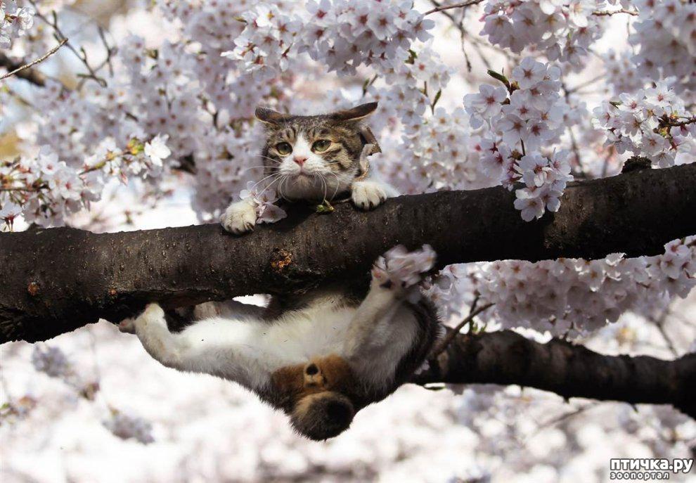 картинки приход весны смешные убежден том, что