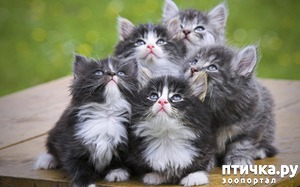 фото: У меня вывелась новая порода кошек)))