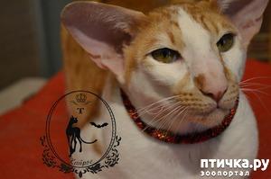 фото: Ошейники для кошек.