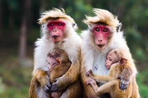 фото: Семейные фотографии из мира животных))