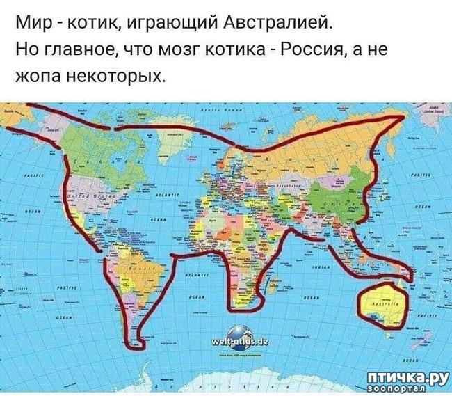 фото 1: КОТИК С МЯЧИКОМ))
