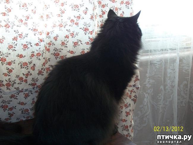 фото 1: Чувства и эмоции кота Матвея