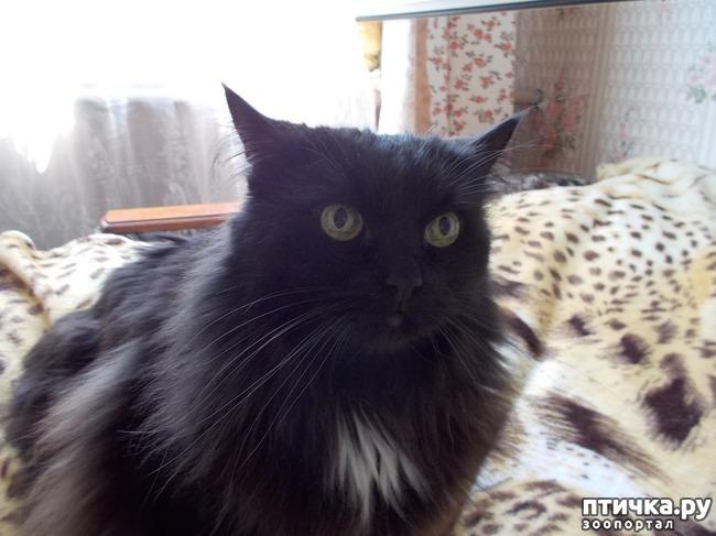 фото 4: Чувства и эмоции кота Матвея