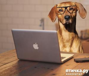 """фото: Обновление группы """"Собаки"""""""