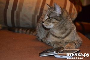 """фото: Обновление в группе """"Кошки"""""""