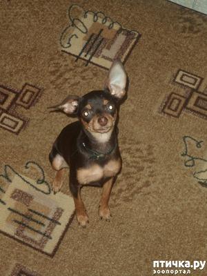 фото: Как отучить собаку лаять дома?