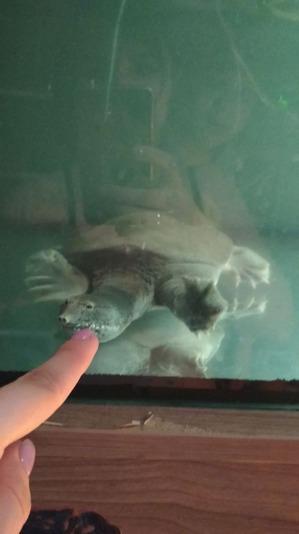 фото: Как мы ходили с черепахами к врачу.