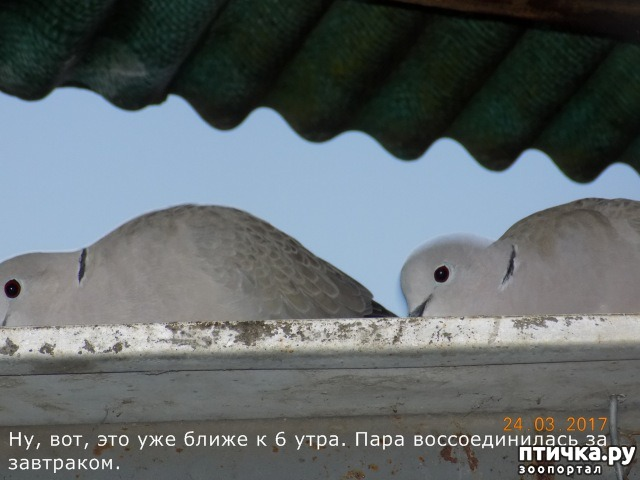 фото 18: И голуби любят когда их понимают