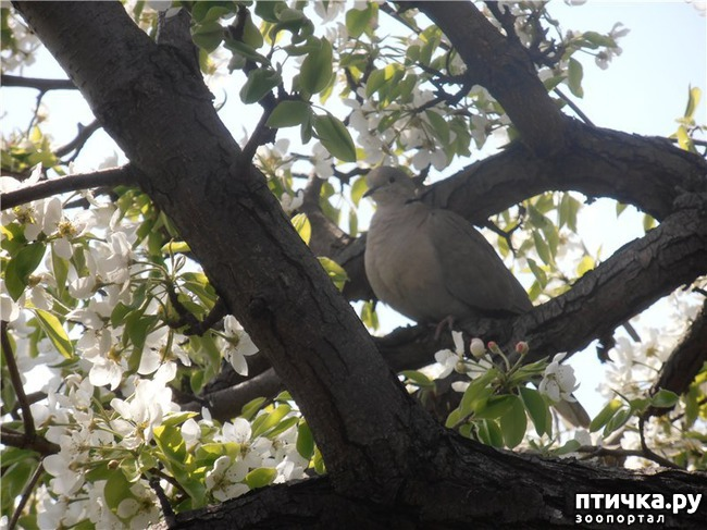 фото 6: И голуби любят когда их понимают