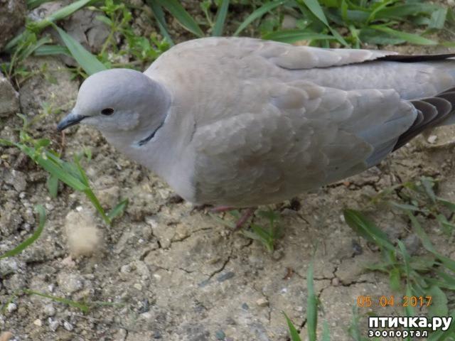 фото 8: И голуби любят когда их понимают