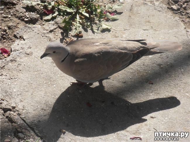 фото 9: И голуби любят когда их понимают