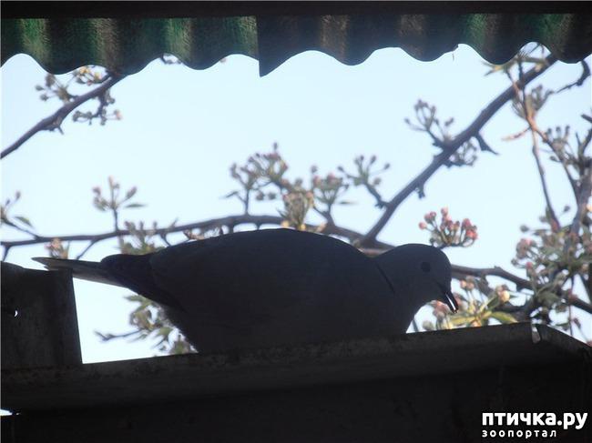 фото 10: И голуби любят когда их понимают