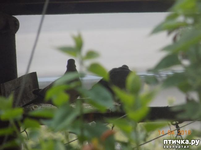 фото 11: И голуби любят когда их понимают