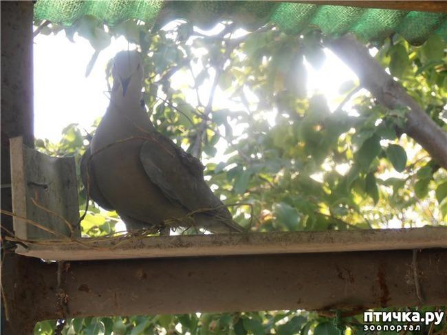 фото 12: И голуби любят когда их понимают