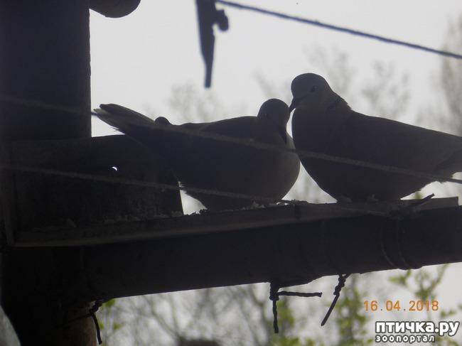 фото 14: И голуби любят когда их понимают