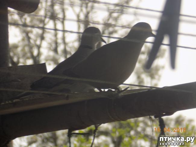 фото 16: И голуби любят когда их понимают