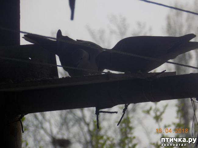 фото 17: И голуби любят когда их понимают