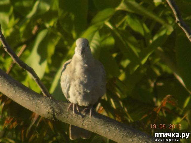 фото 3: И голуби любят когда их понимают