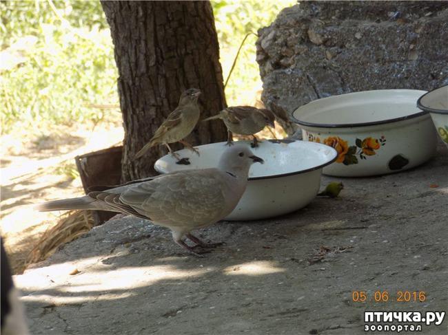 фото 7: И голуби любят когда их понимают