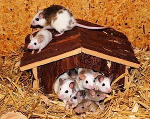 фото: Мои мыши. Собирательный пост.