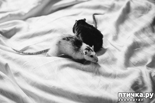 фото 2: Мои мыши. Собирательный пост.