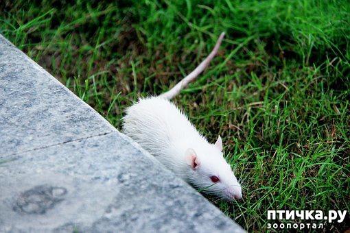 фото 3: Мои мыши. Собирательный пост.