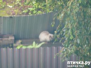 фото: История спасения выкинутой кошечки. Сафира