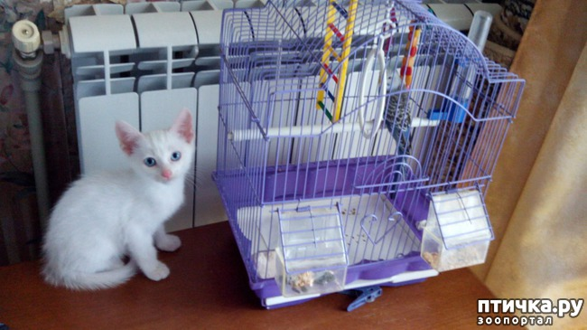 фото 7: И снова балконный квартирант