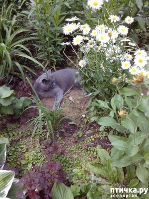 фото: Территория обитания кошки