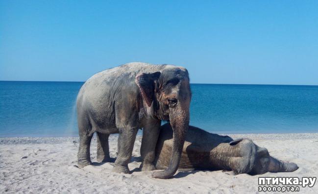фото 5: На море со слонами
