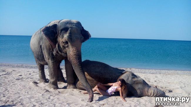 фото 6: На море со слонами