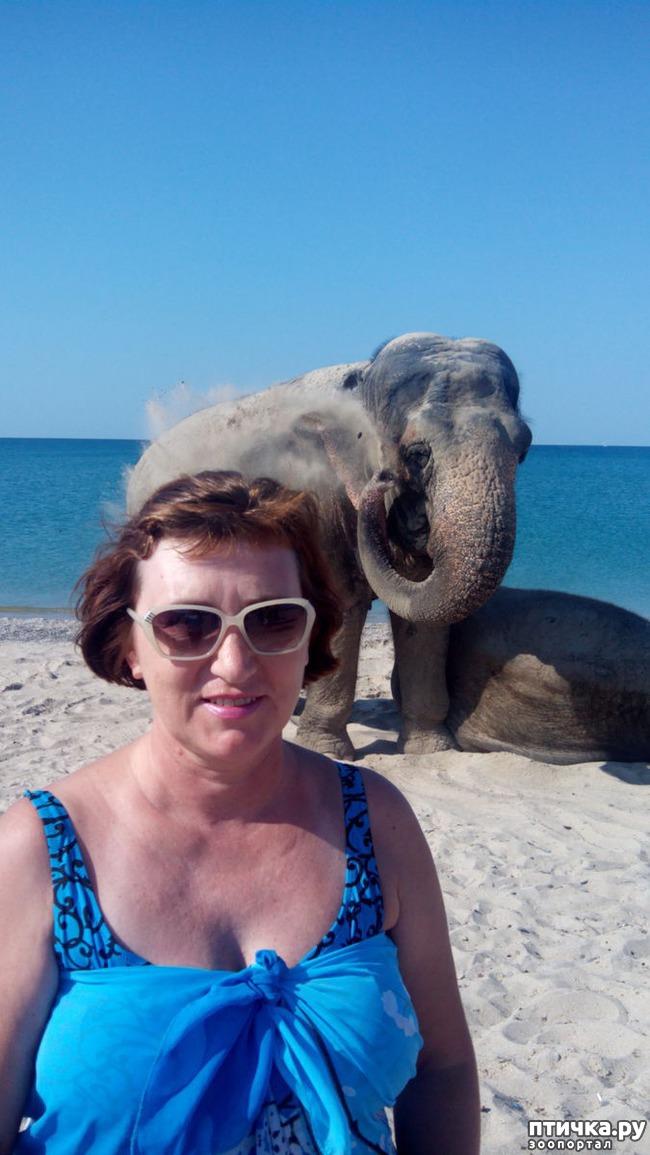 фото 7: На море со слонами