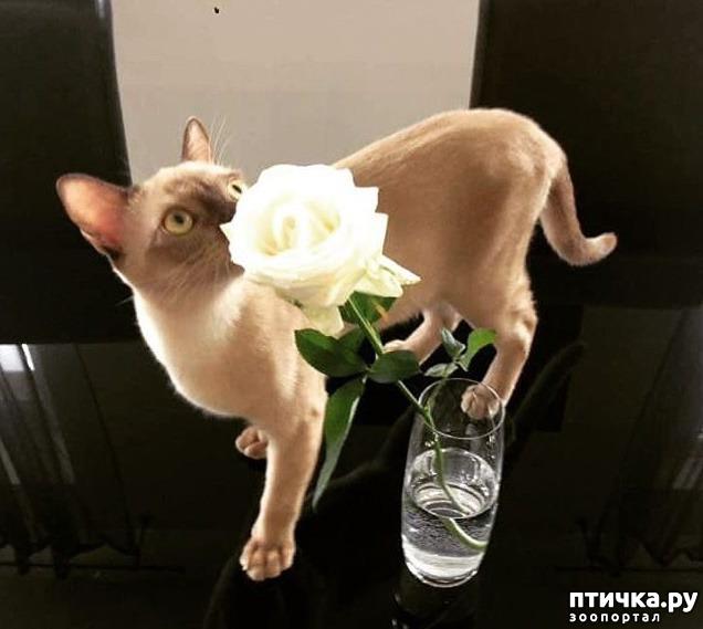 фото 1: Всемирный день кошек