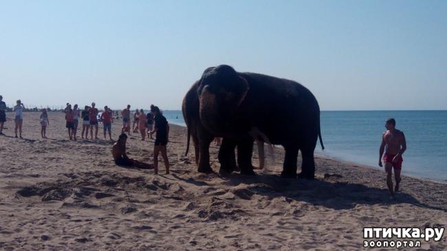 фото 2: На море со слонами