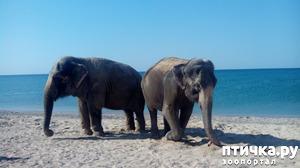 фото: На море со слонами