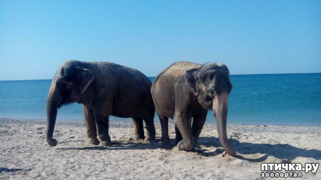 фото 1: На море со слонами