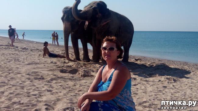 фото 3: На море со слонами