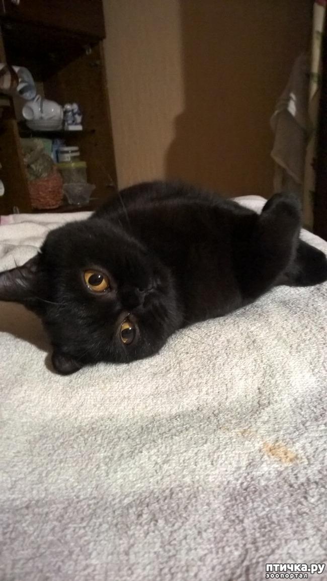 фото 1: От чего зависит выбор клички для кошки?