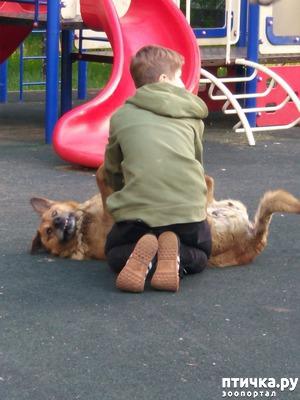 фото: Смешной пес!