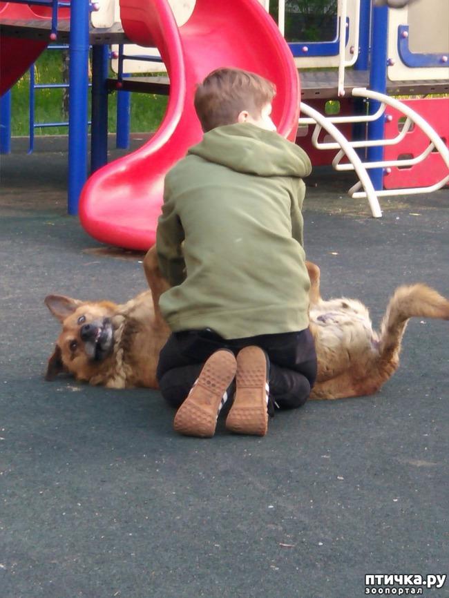 фото 1: Смешной пес!