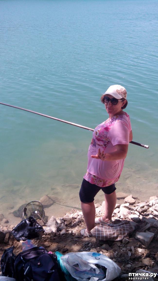 фото 2: Как я рыбу фотографировала