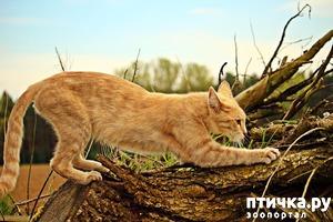 фото: Кошка и когтеточка: нужен совет