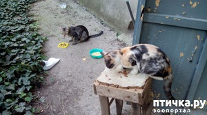 фото: Просто хочется рвать и метать - еще одна кошка!
