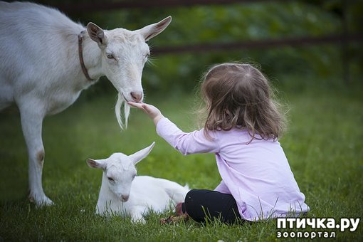 фото 2: Дети и животные: уроки доброты
