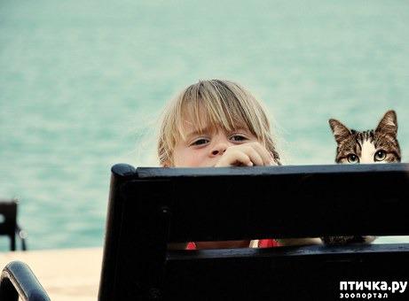 фото 3: Дети и животные: уроки доброты