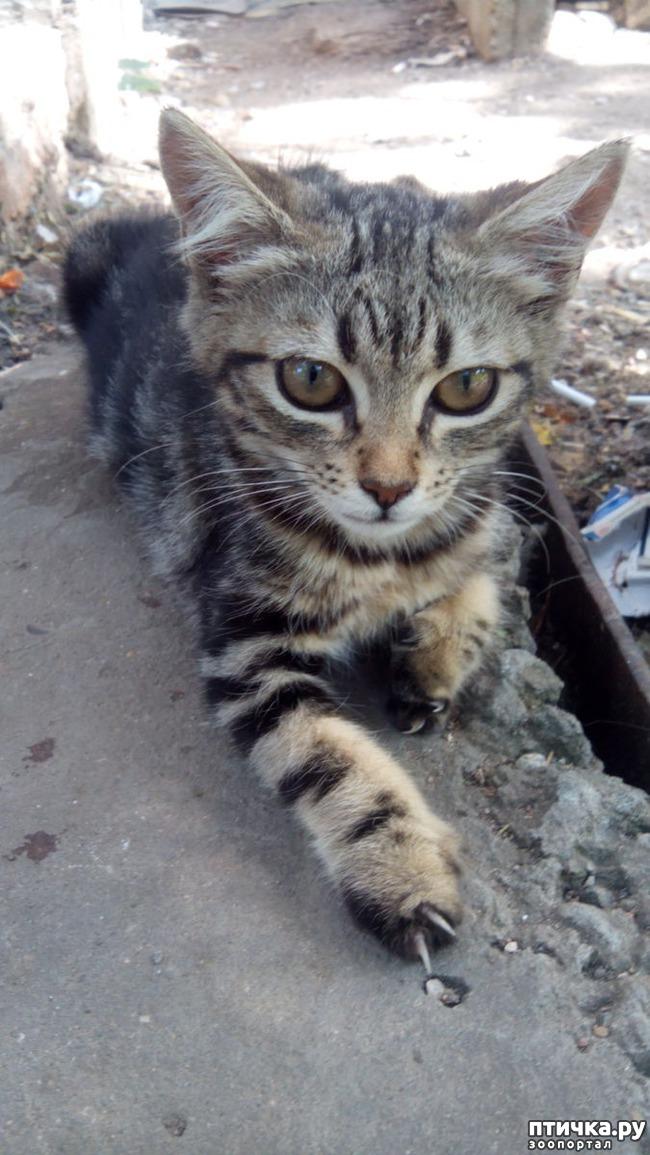 бездомные котята фото с адресом поздравить любимого днем