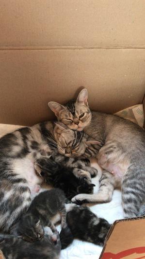 фото: У нас родились замечательные котята))