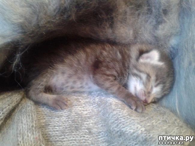 фото 2: Крошка-кошка