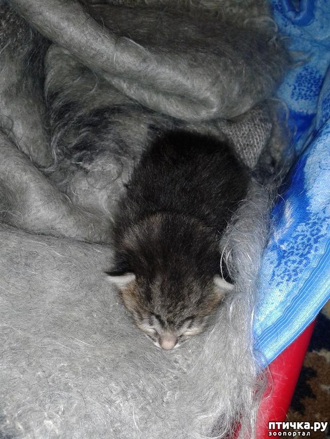 фото 4: Крошка-кошка