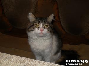 фото: Жизнь с кошками
